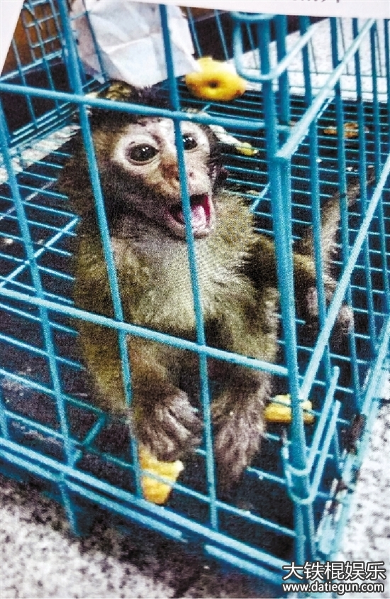 """收购野生动物获刑 男子宠物猴被""""偷""""走报警因非法收购"""