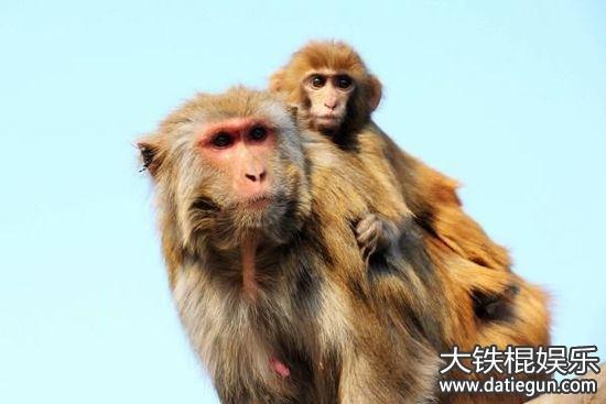 2016年天津野生动物保护法全文实施条例解读