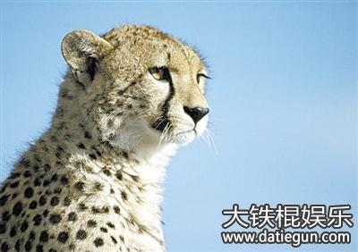 2016年上海野生动物保护法全文实施条例解读