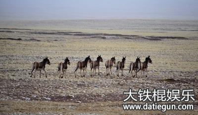 2016年宁夏省野生动物保护法全文实施条例解读