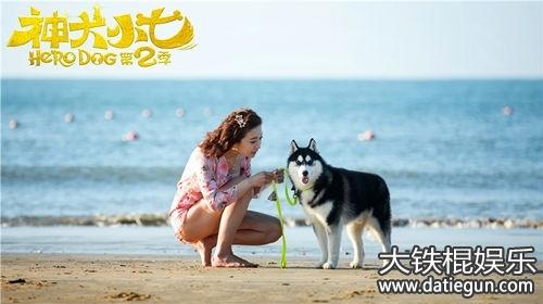 电视剧《神犬小七2》41-42集分剧情介绍