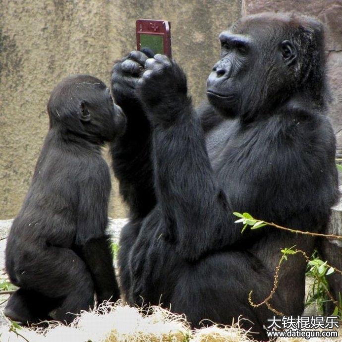 动物笑话,超可爱的动物搞笑笑话大全