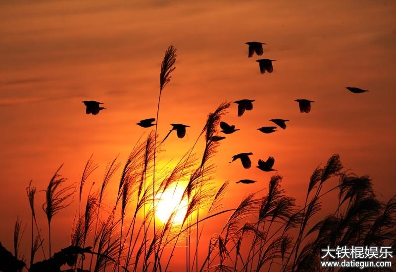 描写夕阳的诗句,描写夕阳的优美诗句大全