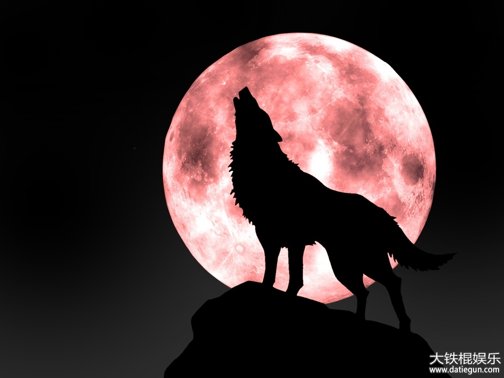 狼王梦书评简介 动物的内心
