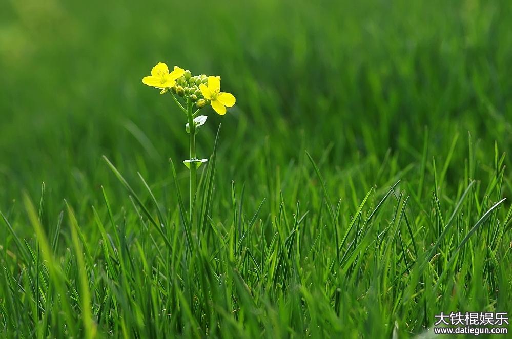 形容春天花开的成语,有关春天成语都有哪些
