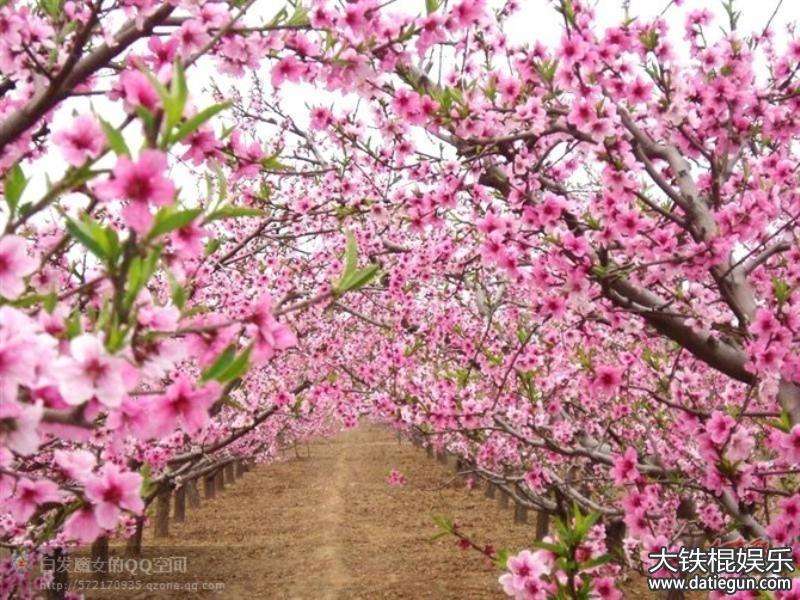 描写春的优美句子。