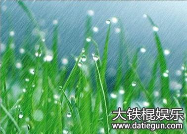 描写春天的树木,草,雨景