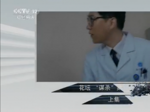 """中央12套普法栏目剧花坛""""谋杀""""案(上集)"""